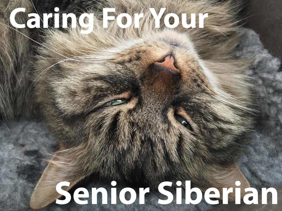 Caring for Senior Cat