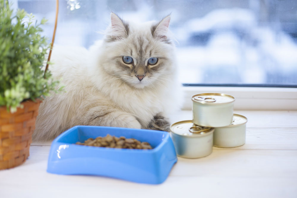 Feeding Your Cat: What, How Much and How Often