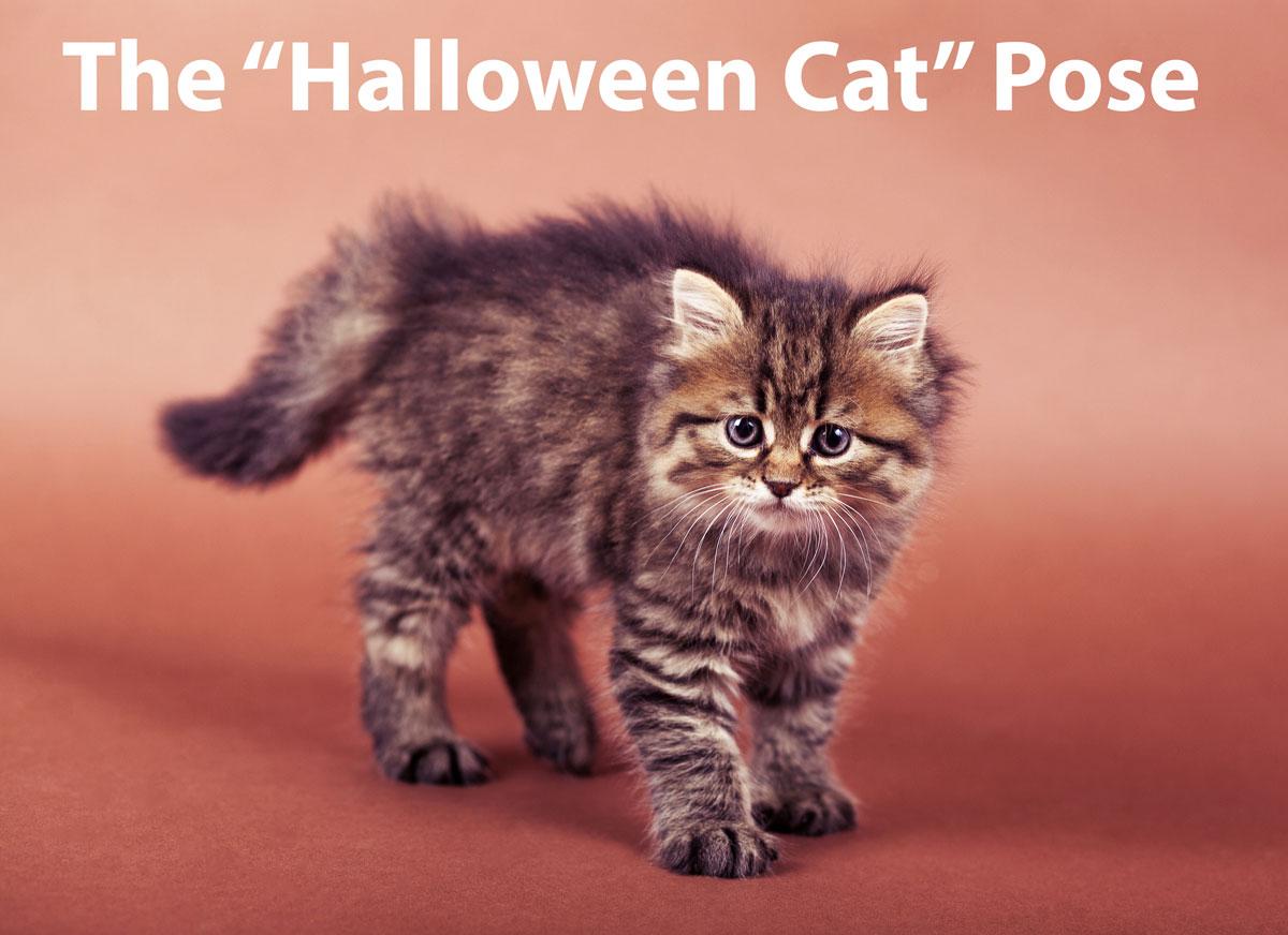 Halloween Cat Pose